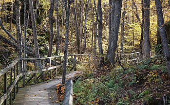 Frontenac_BoardwalkInTheWoods-825x510.jp