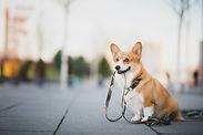 ペットの散歩