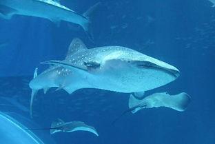 サメのような自由な将来