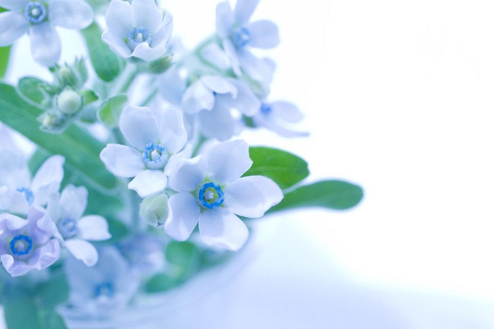 トップ-優しい花