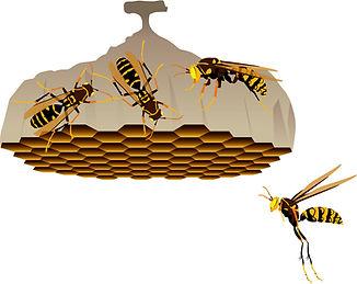 あしながバチ巣.jpg