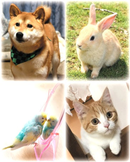 犬・猫・ウサギ・小鳥