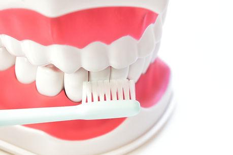 いつまでも自分の歯で食事をしましょう