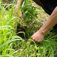 庭の草取り