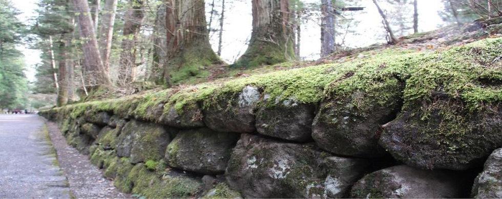 緑豊かな自然
