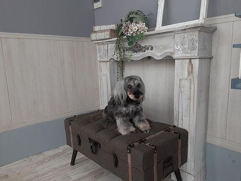椅子に座っている犬