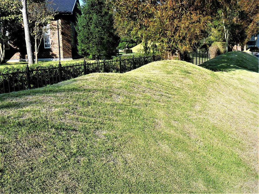 刈り取られた芝生