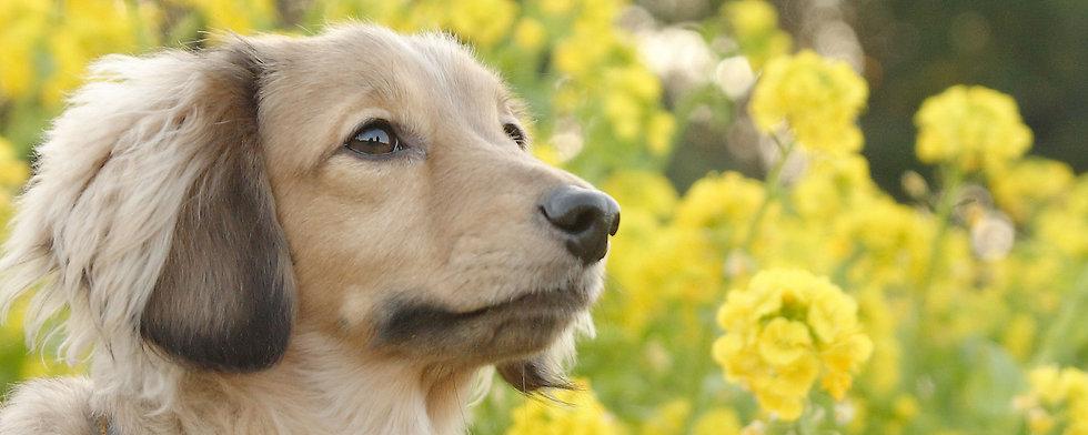 トップ犬.jpg