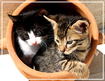 ネコが鉢の中に