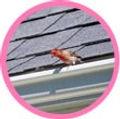加藤塗料株式会社 屋根