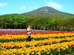 日本のハワイ 八丈島フリージア祭