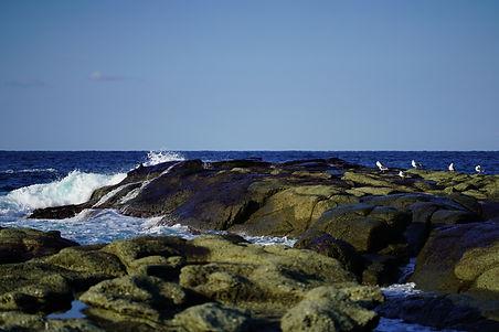 日本海の地磯