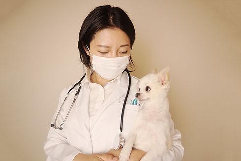 動物看護士によるしつけや予防指導 イメージ