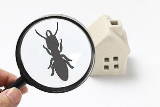 白アリ被害の点検