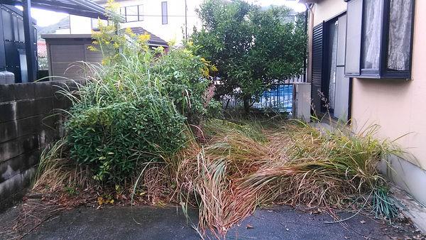 雑草が生い茂った庭