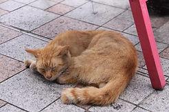 ネコも安心成年後見