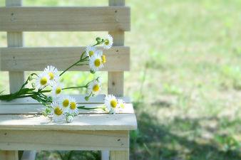 ベンチの花