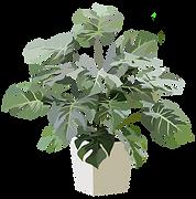 メニュー・料金の観葉植物