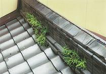 屋根 修繕 屋根上雑草除去_000159-22.jpg