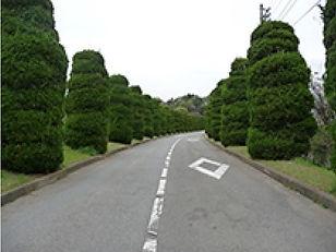 霊園に続く並木道