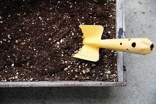 芝生 肥料 薬剤