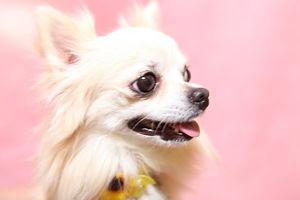 愛犬(小型)