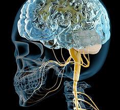 脳神経外科・神経内科
