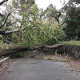 台風被害.jpg
