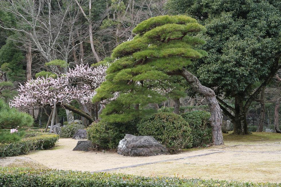 整備された庭園