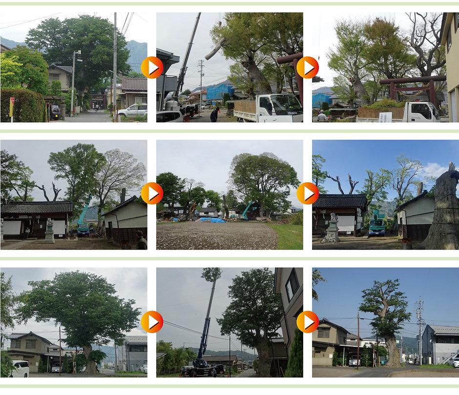 特殊伐採の施工例