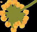 flower%201_edited.png