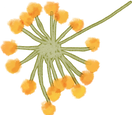 flower%201_edited.png