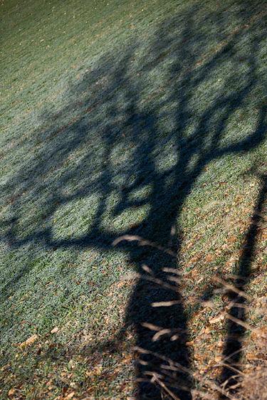 arbre_34.jpg