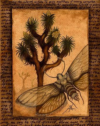 Yucca_moth.jpg