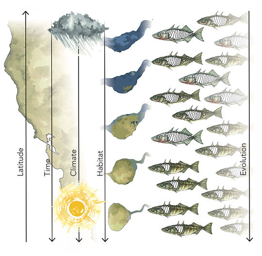 stickleback climate change evolution global change biology