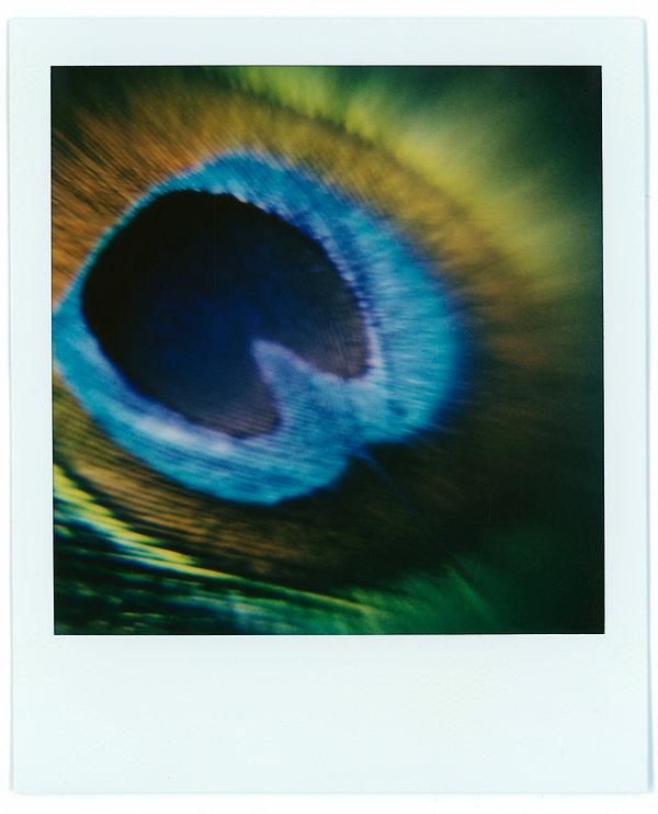 Polaroids 7.jpg