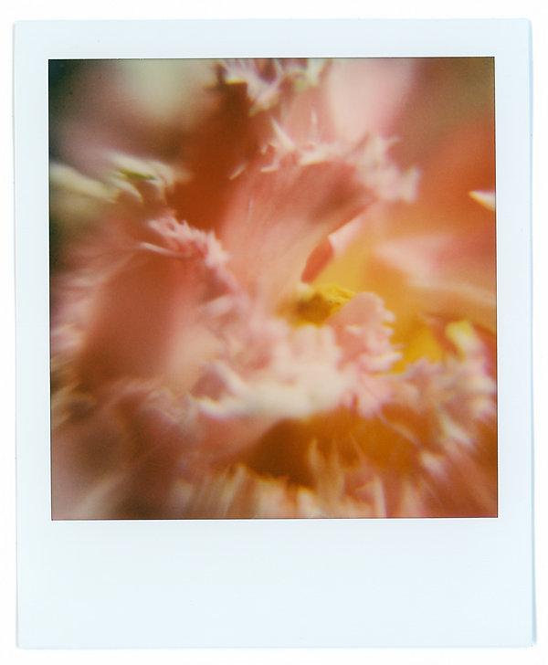 Polaroids 2.jpg