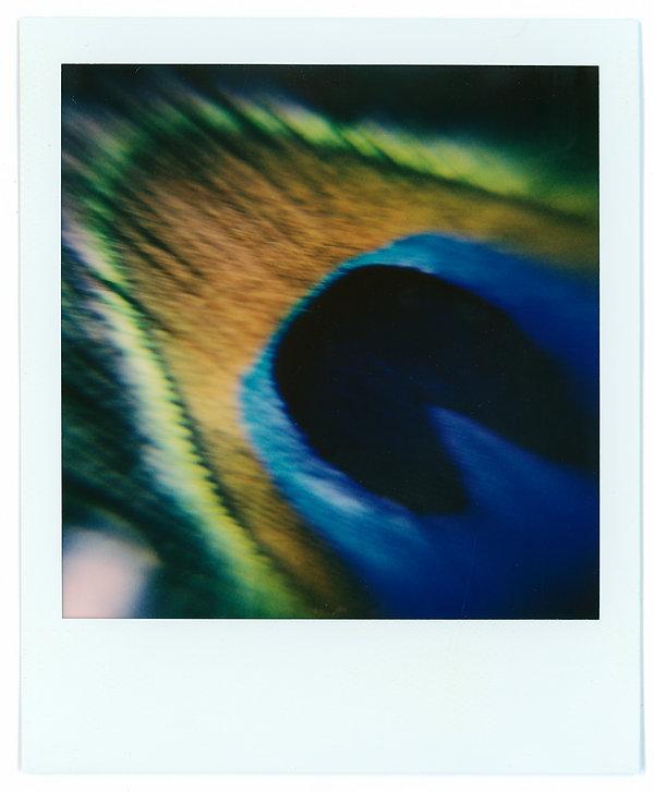 Polaroids 9.jpg