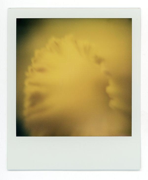 Polaroids 4.jpg