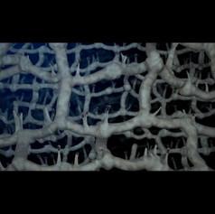 Game o Swarms - video for art instalation of Paula Nishijima
