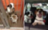 save dogs lives.jpg