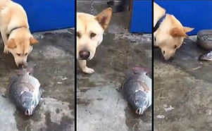 dog-saves-fish.jpg