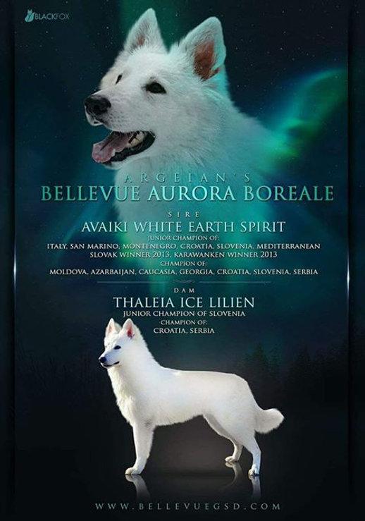 Aurora Picture.jpg
