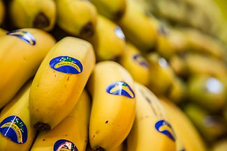 bananes des canaries.jpg