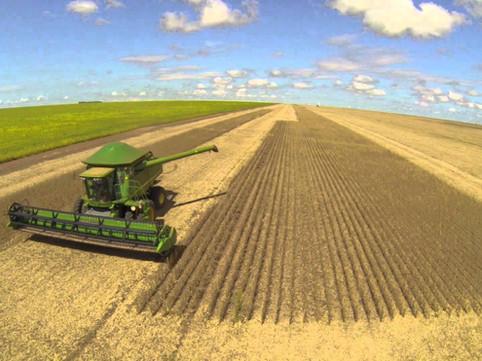 Safra de grãos no Brasil pode bater novo recorde