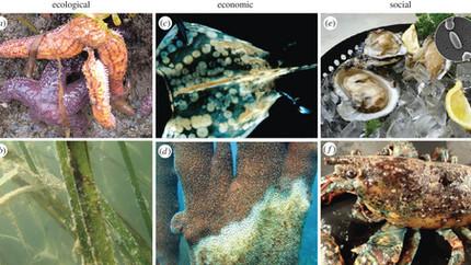 Managing marine disease emergencies in an era of rapid change