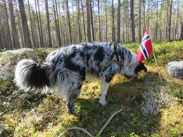Narvik Hundeklubb på 17. mai