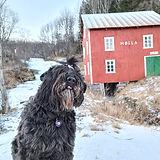 Tulla og Mølla vinter.jpg