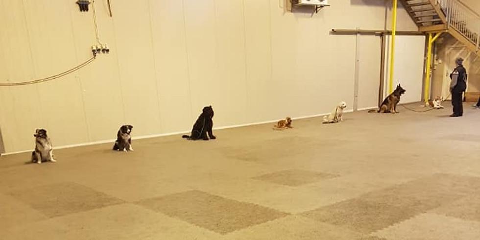 Konkurranserettet treningssamling i lydighet