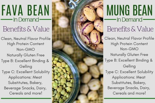 Fava Bean and Mung Bean